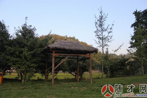 随才网走近世界最大古银杏群落 随州洛阳千年银杏谷 图